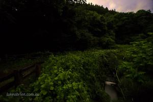 fireflies-fukushima-japan