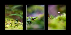 tasmanian macro fine art forest photos