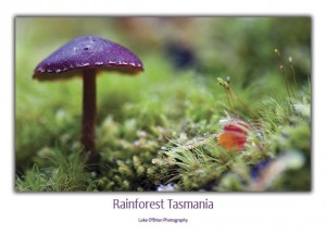 Purple fungi postcard