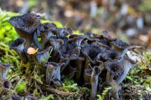 Lichen or fungi on the track