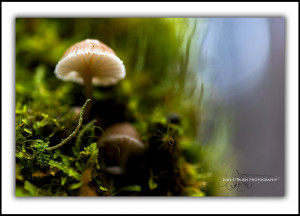 Fungi Cradle Mountain Tasmania