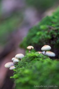 Fungi & Moss - Autumn in the Tarkine Tasmania