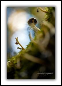 fungi mt field tasmania