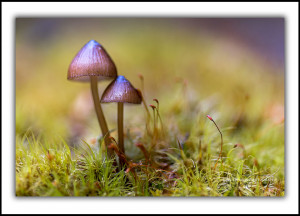 fungi tasmania fine art photography