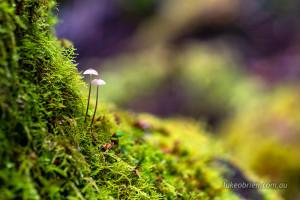 fungi tahune airwalk tasmania