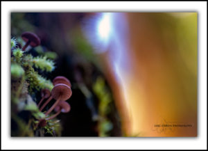 fine art fungi photography tasmania