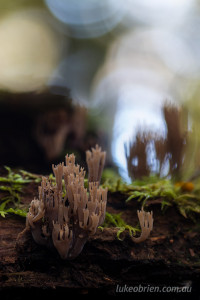 More fungi and bokeh. Another coral.
