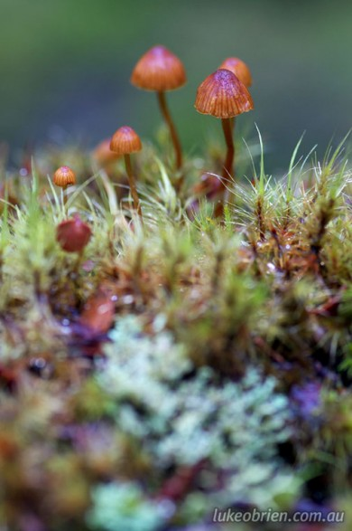 A moss and mushroom macro forest
