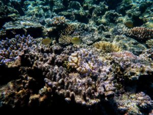Corals and fish at Agincourt Reef