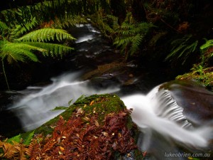 A beautiful Tasmanian rainforest scene in the Great Western Tiers