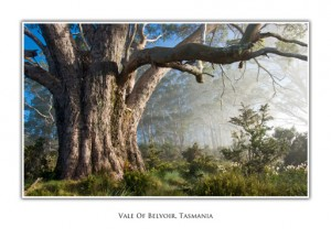 Tasmanian Greeting Cards Vale of Belvoir