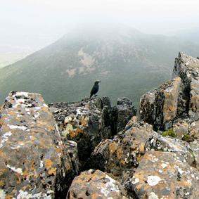 Currawong, Hartz Peak