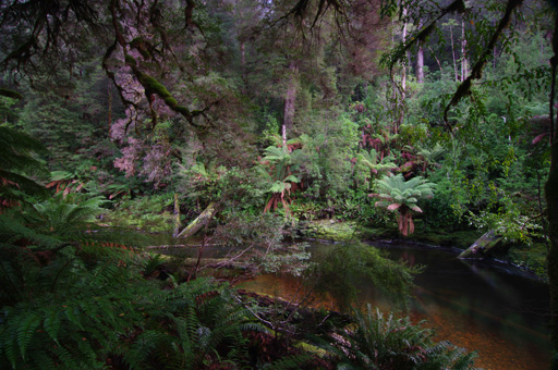 Rainforest along the Styx River