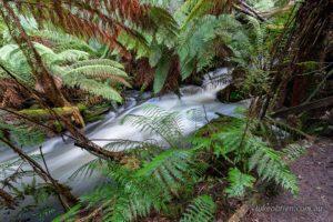 Junee Cave Maydena Tasmania