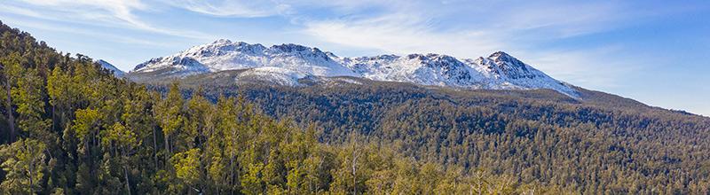 lady binney forest tasmania