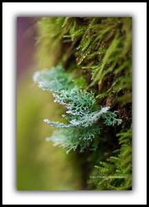 Macro photography Lichen Lake St Clair