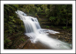 Liffey Falls Tasmania Fine Art Print