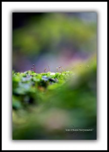 Fine Art Macro Photography Forest Detail Styx Valley