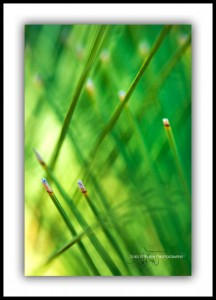 Grass Tree, Macro Abstract