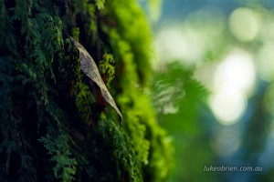 Fallen leaf, Notley Fern Gorge