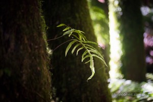Small fern growing off a tall tree fern