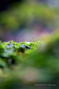 Mossy forest scene - macro photo, Styx Valley