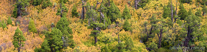 Turning of the Fagus Tasmania: Mt Field & Cradle Mountain
