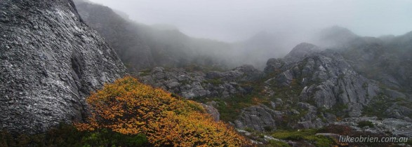 Photographing Tasmania's Fagus: Mt Murchison