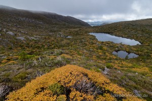 Mt Tyndall & Fagus, West Coast Range, Tasmania