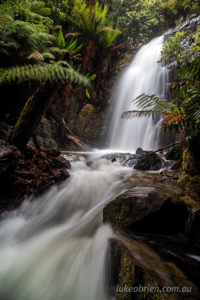 myrtle forest falls collinsvale
