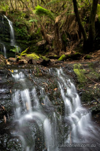 myrtle gully falls mt wellington tasmania
