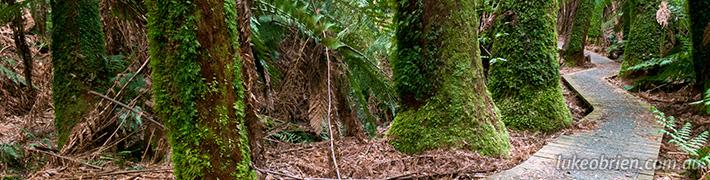 Notley Fern Gorge Walk Tasmania