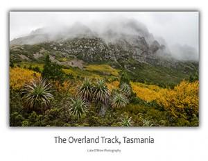 Overland Track Tasmania Postcard Cradle Mountain Fagus