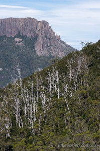 Forth Valley Lookout, Overland Track