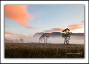 overland track pelion plains mt oakleigh
