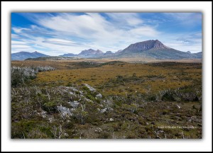 Overland Track - Pine Forest Moor, Mt Ossa & Pelions