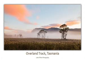 Overland Track: Pelion Plains