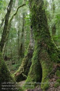 Bay of Fires & Tarkine Photography Tour Tasmania