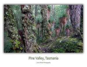 Postcards: Pine Valley Tasmania
