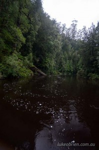 rainforest donaldson river tarkine