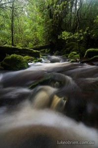 Wombat Creek at the start of the Ramsay Rainforest walk in the Tarkine