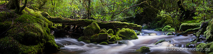 Exploring Tasmania's Tarkine: Ramsay Rainforest