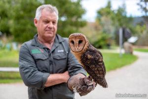 Craig Webb and Monty at the Raptor Refuge, Tasmania