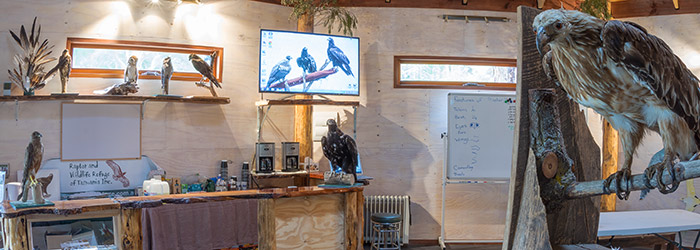Raptor Refuge: Art & Photography Workshop Tasmania