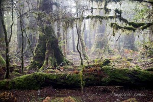 Moss and lichen covers the forest