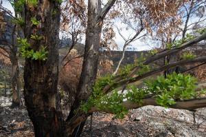 bushfire aftermath south west tasmania 2016