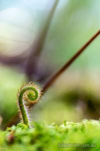 spring fern styx tasmania