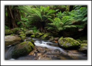 St Columba Falls rainforest Tasmania