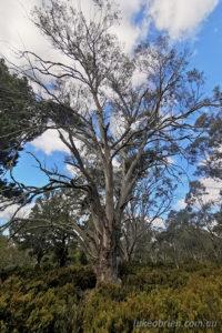 Steppes Homestead, Tasmanian highlands