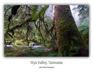 Postcards - Styx Rainforest, Tasmania